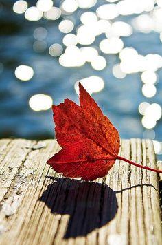 Autumn southern style