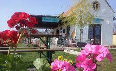 Káptalantóti - Kemencés ház és kézműves udvar Plants, Planters, Plant, Planting