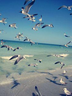 Sea gulls by AlyesaAnDuwe, via Flickr