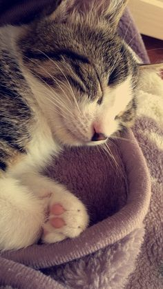 I Love Cats, Cute Cats, Animals And Pets, Cute Animals, Snapchat Picture, Cute Girl Pic, Cat Wallpaper, Tumblr Photography, Girl Photo Poses