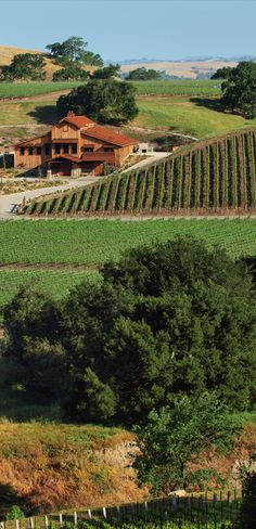 Grassini Family Vineyards and Winery is located on the Urban Wine Trail in Santa Barbara.