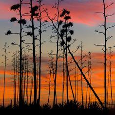 """""""Sunset magic"""", Cabo de Gata, Almería by Pilar Azaña, via 500px."""