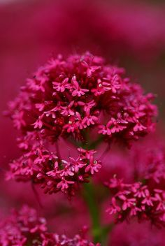 flowers and everything floral Exotic Flowers, Amazing Flowers, My Flower, Pretty In Pink, Pink Flowers, Beautiful Flowers, Colorful Flowers, Garden Plants, Planting Flowers