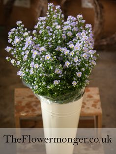 White september flower available in bunches of 5 stems from the september flower in blue available in bunches of 5 stems from the flowermonger the wholesale floral home delivery service mightylinksfo