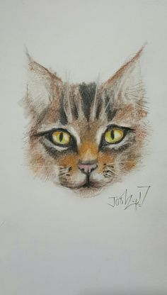 Little Cat. Pastel pencils on A4 watercolour paper.