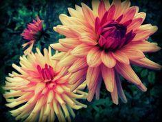 beautiful, color, colour, flower