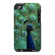 Peacock iPod Cases LOVE