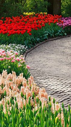 Tulips and hyacinths flowerbed