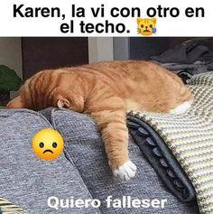 Funny Spanish Memes, Spanish Humor, Funny Memes, Hilarious, New Memes, Comedy Central, Cute Funny Animals, Animal Memes, Kawaii Anime