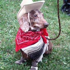 cowboy weiner dachshund