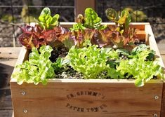 Give a gift of garden! With Dr. Grimme & # s Planters can easily plant salads, strawberries, Grimm, Fleurs Diy, Bois Diy, Gardening, Woodworking Jigs, Room Accessories, Planter Pots, Succulents, Strawberries