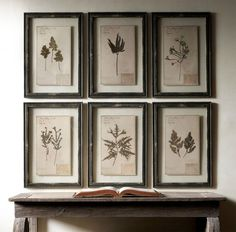 Frame leaves from an antique herbarium by sandwiching them between glass and using identical, worn moulding.
