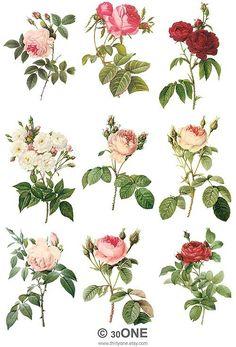 The Love of Roses - Digital Collage Sheet - For unlimited number of prints - Set 1 Scrapbook, Impressions Botaniques, Vintage Botanical Prints, Decoupage Paper, Collage Sheet, Digital Collage, Botanical Illustration, Vintage Flowers, Watercolor Art