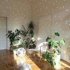 party plants