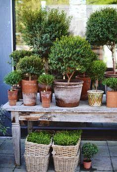 Garden Ideas. Plants.  Choices? Like. U?