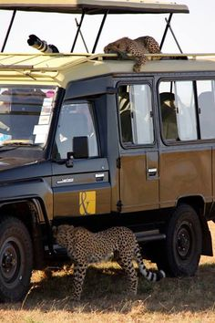 Holidays in Kenya, Kenya Safari, Luxury Vacation Tour - A&K India Kenya Travel, Africa Travel, Out Of Africa, East Africa, Safari Holidays, Safari Chic, Safari Adventure, African Safari, African Animals