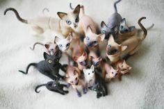 cats bjd :)