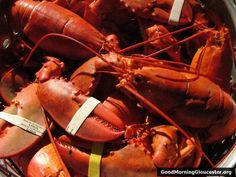 Lobsters from Capt. Joe and Sons on East Main St. What are ya waitin' for? Go!