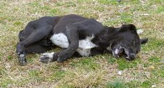 Μαζικές θανατώσεις ζώων με πάνω από… 60 φόλες