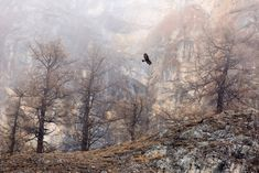 Golden Eagle, the Alps, by Maximilian Hornisch –German Wildlife Photographers (GDT) Nature Photographer of the Year, overall winner and first place in the birds category Photography Competitions, Photography Awards, Wildlife Photography, Animal Photography, Landscape Photography, Environment Concept Art, Cool Landscapes, Natural World, The Guardian