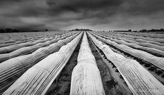 Basil Parker Его работы завораживают, каждая фотография хочет рассказать какую-то историю, о чем-то сообщить и наполнить воображение сценарием. http://websta.me/n/basilparker https://twitter.com/basilparker https://500px.com/basilparker  #photo #фото #bw #чб #basil #parker #sky #farm #ферма
