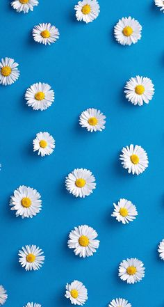 Cute Flower Wallpaper For Iphone Daisy Wallpaper, Tumblr Iphone Wallpaper, Wallpaper For Your Phone, Screen Wallpaper, Cool Wallpaper, Pattern Wallpaper, Flower Iphone Wallpaper, Iphone Bleu, Iphone Hintegründe