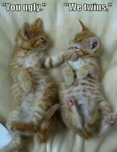 Funny Cats : 16 Funny Cat Photos with Caption<<<Fred and George Weasly. Funny Animal Jokes, Funny Cat Memes, Cute Funny Animals, Cute Baby Animals, Funny Humor, Animal Humor, It's Funny, Cute Animal Quotes, Funny Stuff