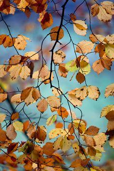 Brown leaves and blue skies