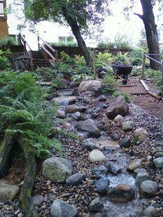 backyard little stream