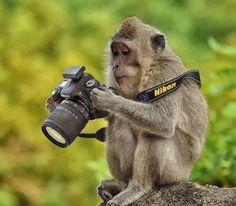 最近のカメラは、サルにでも撮れるくらいに簡単なのに、何で俺に頼むかなぁ〜?