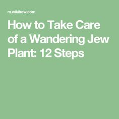 How to Take Care of a Wandering Jew Plant: 12 Steps