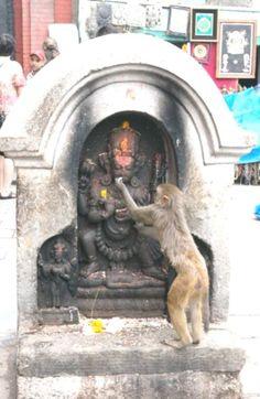 India, Culture, Monkey in the Temple, Hare Krishna, Krishna Art, Bhagavad Gita, Om Namah Shivaya, Indian Gods, Indian Art, Lord Hanuman Wallpapers, Hanuman Images, Shri Hanuman