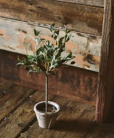 Mini Olive Tree faux flowers Olive Tree