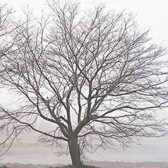 霧の朝です