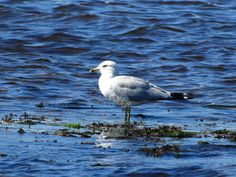 This seagull was standing on a rock way off shore. If he had not been there we would have hit this rock. No buoy or marker.