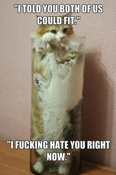 funny animals Omg this is funny.