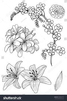 Vector de stock (libre de regalías) sobre Set Exotic Flowers Doodle Vector Illustration386024773