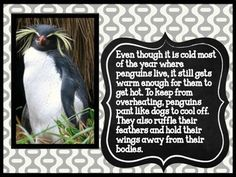 """FREE!!  """"A BOOK ABOUT PENGUINS"""" ..... Follow for Free """"too-neat-not-to-keep"""" teaching tools & other fun stuff :)"""