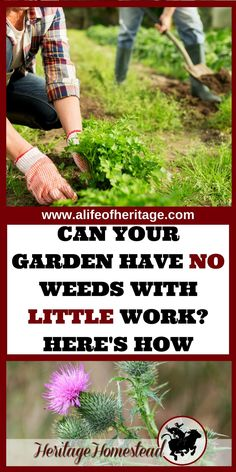 Gardening   Why my garden has weeds   Eliminating weeds   How to garden   Gardening for beginners   No Till Garden   Why does my garden have weeds? Your garden will thrive when you understanding WHY it  has weeds. Eliminate them naturally while working with nature.