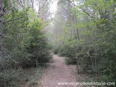 fotografía del barranco del Horcajo http://viajerodelahistoria.com/2014/09/15/parque-natural-del-alto-tajo-guadalajara/