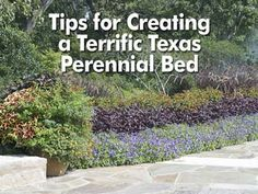 Flower Garden Ideas Texas texas perennialszone | texas, corpus christi and plants