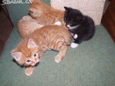 Koťata - obrázek číslo 1 Cats, Animals, Gatos, Animales, Animaux, Animal, Cat, Animais, Kitty