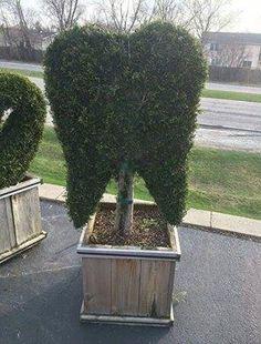 How the bushes are shaped around a #dental clinic. www.dentalcarebellingham.com http://tmiky.com/pinterest