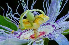 große Blüten Zimmerpflanzen Pflege Tipps Anfänger
