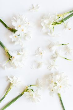 paperwhites - photo by Sweet Root Village http://ruffledblog.com/pale-pink-and-icy-blue-floral-arrangement