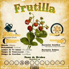 Frutilla2.jpg (700×700)