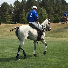 Riding Helmets, Polo, Horses, Hats, Animals, Polos, Animales, Hat, Animaux