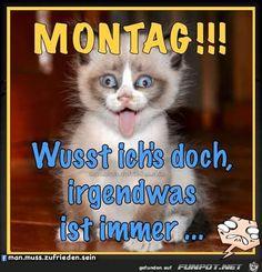 lustiges Bild 'Montag  .jpg' von Floh. Eine von 61029 Dateien in der Kategorie 'Lustiges' auf FUNPOT.
