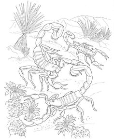 Printable Coloring Pictures Of Animals Inspirational Desert Coloring Pages Best Coloring Pages for Kids Turtle Coloring Pages, Lego Coloring Pages, Farm Animal Coloring Pages, Detailed Coloring Pages, Disney Coloring Pages, Coloring Pages For Kids, Coloring Books, Desert Animals And Plants, Desert Drawing