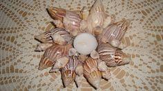 candle holder seashell ideas